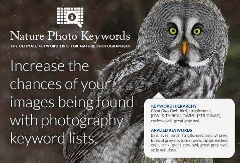 Increase the chances of your images being found with photography keyword lists.